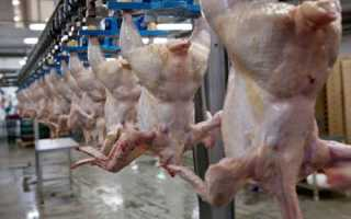 Марки опасного для здоровья куриного мяса: важно знать