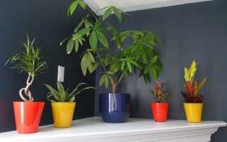 Тенелюбивые комнатные растения с фото и названиями: самые лучшие