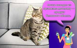 Как и чем отмыть кошачью мочу: способы и средства