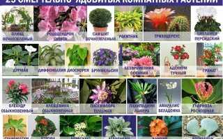 Опасные комнатные растения, которые мы зря сажаем в доме: фото и описание