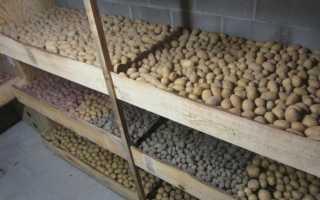 Как хранить картофель в домашних условиях в квартире зимой
