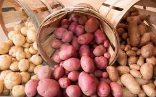 Как правильно хранить картошку: советы