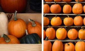 Как хранить тыкву: сколько можно держать разрезанный овощ в домашних условиях, допустимые температуры