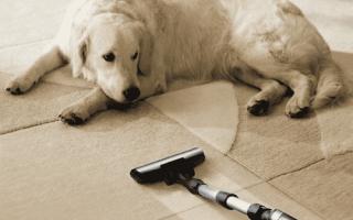 Как убрать воск с ковра в домашних условиях народными средствами: фото, отзывы