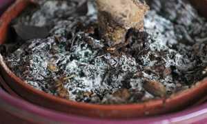 Белый налет на земле в цветочных горшках: как избавиться (способы)