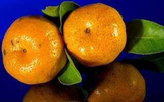 Чем грозит мандариновое переедание: важно знать всем
