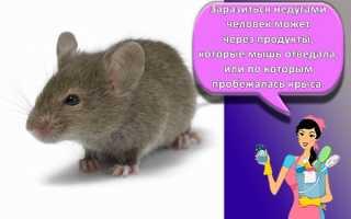 Как избавиться от мышей: хорошие способы уничтожения грызунов