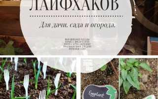 Лайфхаки для садоводов: советы, идеи