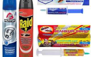 Как избавиться от муравьев в доме навсегда в домашних условиях