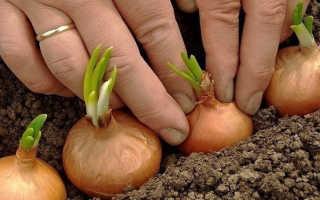 7 хитростей для получения большого урожая: советы дачников