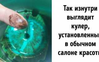 Почему кулер надо регулярно чистить: чем опасна вода из кулера