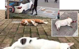 В Китае кошек и собак выкидывали из окон после того как их назвали разносчиками коронавируса: новости