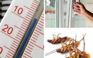 Как избавиться от тараканов навсегда в квартире в домашних условиях