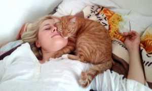 Медики объяснили, почему нельзя спать рядом или в обнимку с кошкой: важно знать
