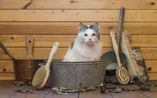 Как помыть кота в домашних условиях, если он боится воды и царапается: подготовка к процедуре, способы мойки кота, как высушить