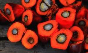 Правда ли, что пальмовое масло вызывает рак: чем оно опасно
