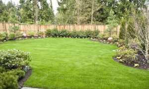 Как посеять газонную траву своими руками правильно: фото, видео
