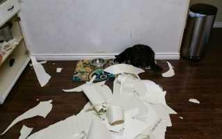 Как отучить кошку драть обои и мебель – 9 проверенных способов