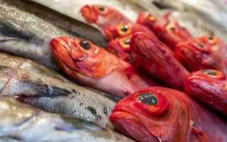 Охлажденная рыба: срок хранения и требования к качеству