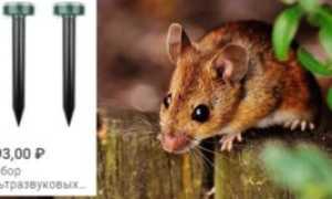 Чего боятся мыши: ловушки, отпугиватели и народные средства для устранения крыс и других грызунов в квартире