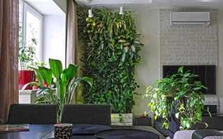 Вьющиеся комнатные цветы: фото и их названия