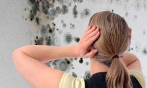 Как избавиться от плесени и грибка на стенах: методы борьбы