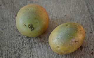 Почему очень опасно есть картошку с позеленевшей кожурой: важно знать