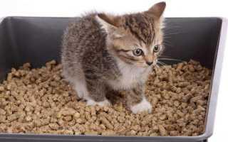 Как приучить котёнка к лотку в квартире: критерии выбора кошачьего туалета