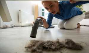 Из чего состоит пыль: источники возникновения пыли в квартире, польза и вред пыли