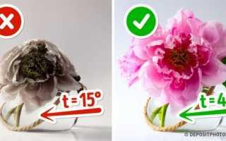 Как сохранить цветы в вазе подольше: эффективные способы, народные методы