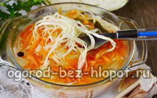 Суточная капуста с морковью и чесноком быстрого приготовления: рецепт с фото пошагово